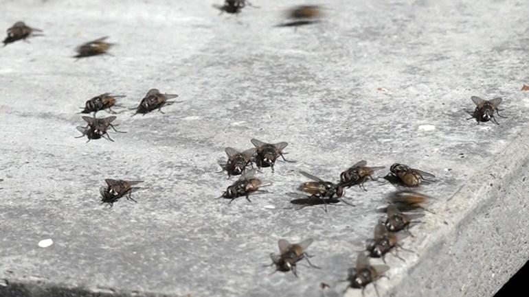 Vliegen bestrijden bij een vliegenplaag