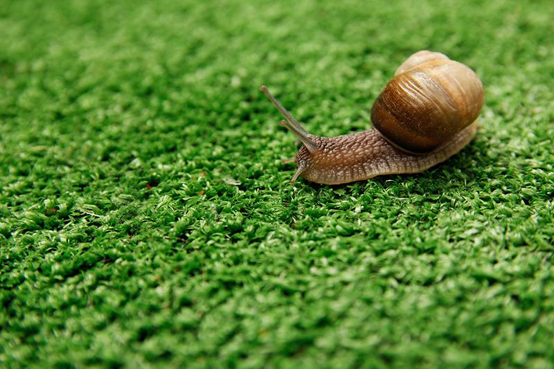 Slakkenslijm - slak op het gras