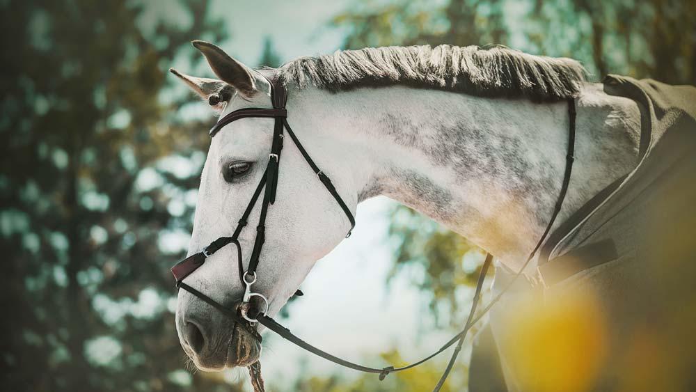 uitrijdeken paard